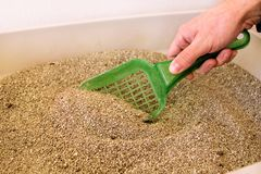 Cleaning cat litter box royalty free stock photo