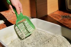 Cleaning cat litter box. Hand is cleaning of cat litter box with green spatula. Toilet cat cleaning sand cat. Cleaning cat excrement. Hand holding plastic stock photos