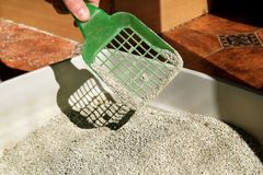 Cleaning cat litter box. Hand is cleaning of cat litter box with green spatula. Toilet cat cleaning sand cat. Cleaning cat excrement. Hand holding plastic stock image