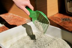 Cleaning cat litter box. Hand is cleaning of cat litter box with green spatula. Toilet cat cleaning sand cat. Cleaning cat excrement. Hand holding plastic stock photo