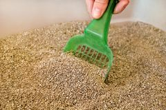 Cleaning cat litter box. Hand is cleaning of cat litter box with green spatula. Toilet cat cleaning sand cat. Cleaning cat excrement. Hand holding plastic Royalty Free Stock Image