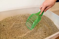 Cleaning cat litter box. Hand is cleaning of cat litter box with green spatula. Toilet cat cleaning sand cat. Cleaning cat excrement. Hand holding plastic royalty free stock images