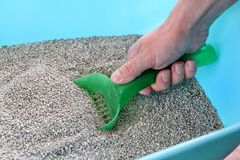 Cleaning cat litter box. Hand is cleaning of cat litter box with green spatula. Toilet cat cleaning sand. Man hand and cat litter box. Kitty litter. Plastic royalty free stock photography