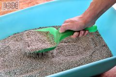 Cleaning cat litter box. Hand is cleaning of cat litter box with green spatula. Toilet cat cleaning sand. Man hand and cat litter box. Kitty litter. Plastic Stock Images