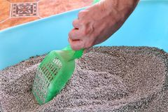 Cleaning cat litter box. Hand is cleaning of cat litter box with green spatula. Toilet cat cleaning sand. Man hand and cat litter box. Kitty litter. Plastic Stock Photo