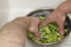 Free Cleaning Celery Stock Image - 23263901