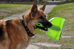 Cleaning dog Royalty Free Stock Photography
