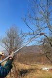 cleaning drzewo Zdjęcia Stock