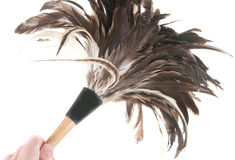 Cleaning with feather duster Royalty Free Stock Photography