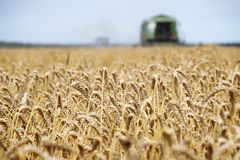 Cleaning field combine  Royalty Free Stock Photos