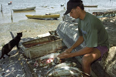 Cleaning fish by a fisherman Stock Photos