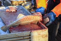 Cleaning fish on the fishing schooner Royalty Free Stock Photos