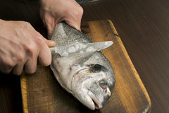 Cleaning fish on a wooden board Royalty Free Stock Images