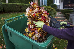 Cleaning Front Yard during Autumn Stock Images
