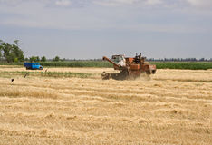 Cleaning grain. Combine and truck in field Royalty Free Stock Photography