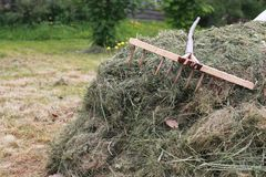 Cleaning with a rake on a farm. Cleaning grass and leaves with a rake on a farmr Royalty Free Stock Images