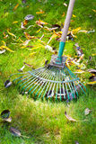 Cleaning green lawn from dead leaves Royalty Free Stock Photos