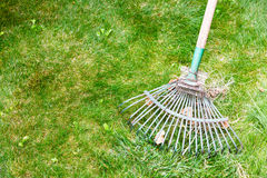 Cleaning green lawn from leaves by rake Royalty Free Stock Photos