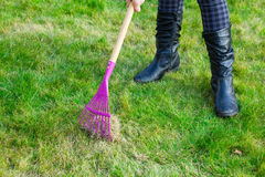 Cleaning green lawn by rake Royalty Free Stock Photos