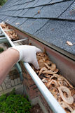 Cleaning Gutters. Closeup of a hand cleaning gutters filled with maple seeds Stock Photo