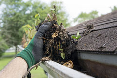 Cleaning Gutters During The Summer Stock Photography