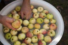Cleaning jabłka w pucharze z wodą Zdjęcie Royalty Free