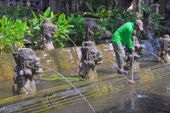 Cleaning the Lilly Ponds, Bali Indonesia Royalty Free Stock Photos