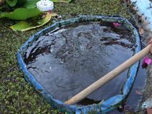 Cleaning muck from a fish pond in the caribbean. Using a home-made tool to scoop mud from a tilapia pool in the windward islands stock video footage