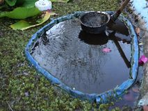 Cleaning muck from a fish pond in the caribbean. Using a home-made tool to scoop mud from a tilapia pool in the windward islands stock footage