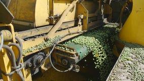 Cleaning Of Peas, Combine Harvesting Peas PLOEGER EPD 530 Royalty Free Stock Image