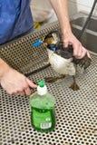 Cleaning an oil bird Stock Photos