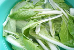 In the cleaning pakchoi Stock Photos