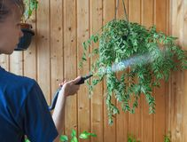 Cleaning plants steam generator. Antiparasitic treatment. Protection of plants from parasites. Cleaning plants steam generator. Antiparasitic treatment Royalty Free Stock Images