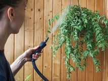 Cleaning plants steam generator. Antiparasitic treatment. Protection of plants from parasites. Cleaning plants steam generator. Antiparasitic treatment Royalty Free Stock Image