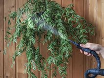 Cleaning plants steam generator. Antiparasitic treatment. Protection of plants from parasites. Cleaning plants steam generator. Antiparasitic treatment Stock Photography