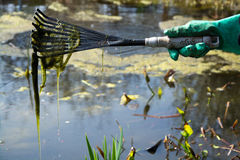 Cleaning a Pond Stock Photography
