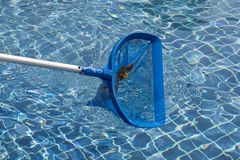 Cleaning pool net. Cleaning pool in sunny day light Royalty Free Stock Photo