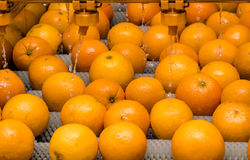 The cleaning process of oranges Royalty Free Stock Images