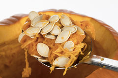 Cleaning Pumpkin for Carving. Large spoon of pumpkin seeds scraped from inside pumpkin to prepare for carving jack o lantern royalty free stock photography