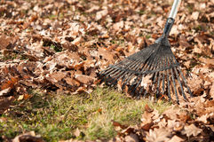 Cleaning with rake of autumn leaves Stock Photo