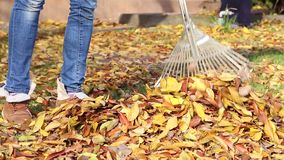 Cleaning rake autumn leaves stock video footage