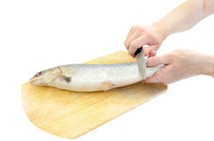 Cleaning raw fish Stock Photos