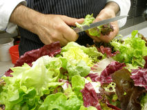 Cleaning salad Royalty Free Stock Image