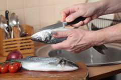 Cleaning a sea bass. Cook cleaning a sea bass on a wooden cutting board royalty free stock photo