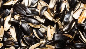 Background from the husks of sunflower seeds. Cleaning of seeds.Background from the husks of sunflower seeds stock photo