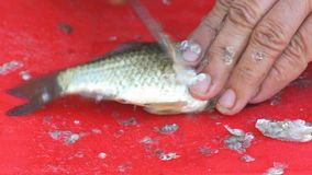 Cleaning small fish from scales stock footage