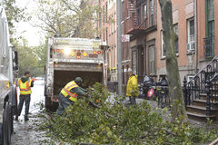 Cleaning after storm Sandy. Cleaning crews picking up branches after super storm Sandy Royalty Free Stock Photography
