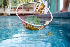 Cleaning swimming pool of fall leaves with cleaning net Royalty Free Stock Image