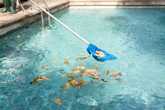 Cleaning swimming pool of fallen leaves with blue skimmer Royalty Free Stock Image