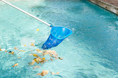 Cleaning swimming pool of fallen leaves with blue skimmer Royalty Free Stock Photos